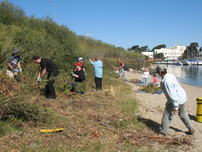 Image of Stewardship Work Day activitiy on YBI