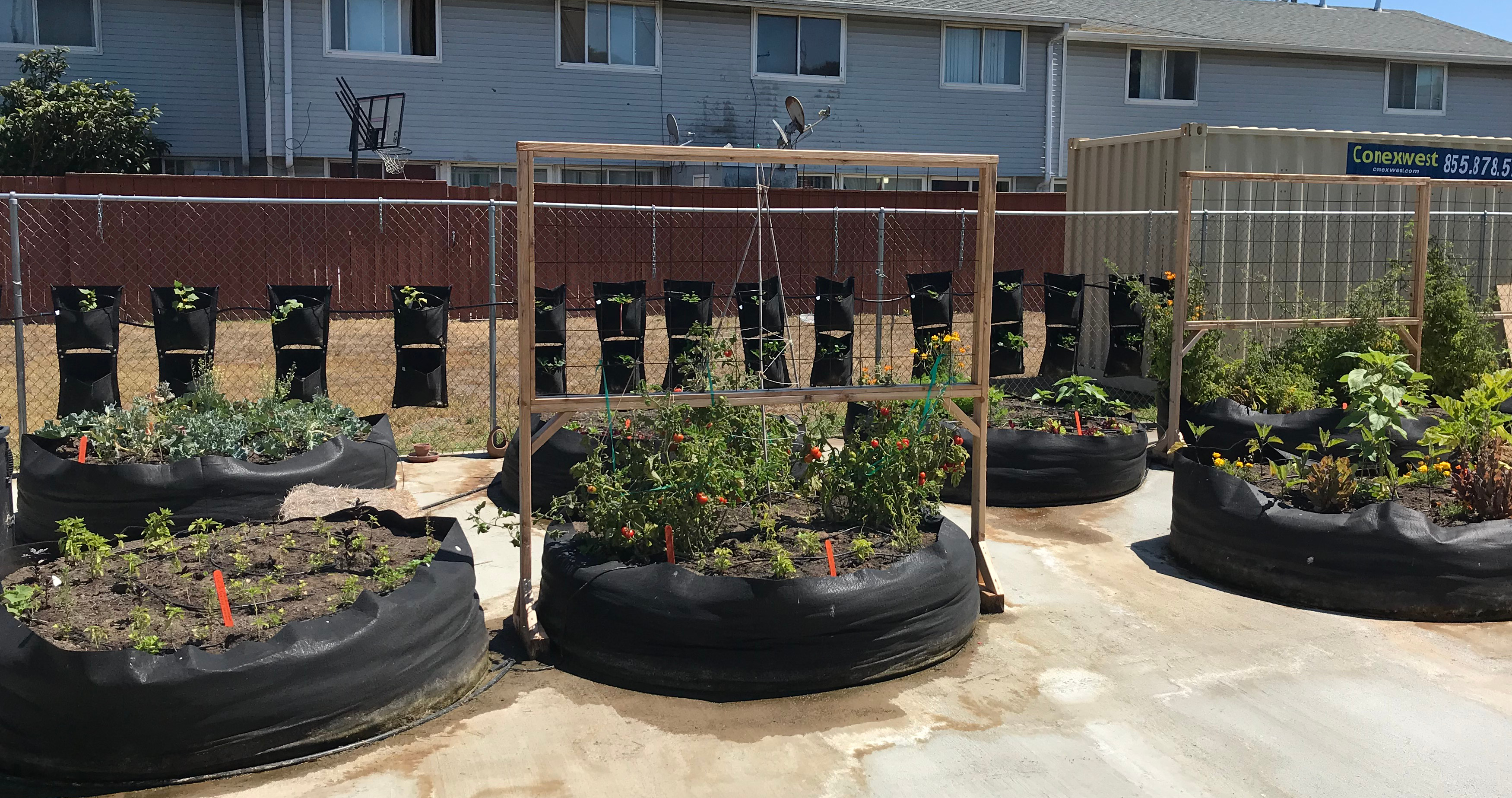 Image of Treasure Island Community Garden planter beds