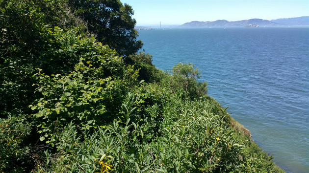 Image of Coastal scrub on YBI western bluff